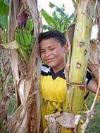 Luis Felipe in a banana plant (Photo: Gisella Evel Sarria)