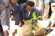 The Prime Minister planting a tree - Photo: C. Ngo Biyack